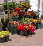 Fleurs dans la stalle du marché Photo libre de droits
