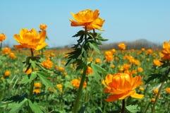 Fleurs dans la steppe au printemps image libre de droits