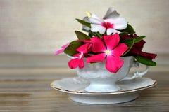 Fleurs dans la tasse de porcelaine Image stock