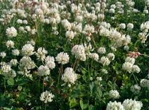 Fleurs dans la toundra photographie stock libre de droits