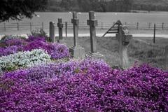 Fleurs dans la tristesse Images stock