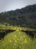 Fleurs dans la vigne Photos stock