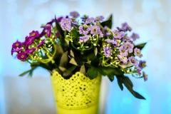Fleurs dans la violette de pot Photo libre de droits