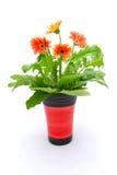 Fleurs dans le bac images stock