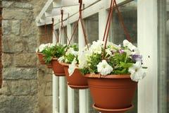 Fleurs dans le bac de fleur photo libre de droits