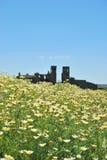 Fleurs dans le château, Montemor o Novo, Portugal photographie stock libre de droits