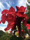 Fleurs dans le ciel Photo libre de droits