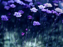 Fleurs dans le clair de lune images libres de droits
