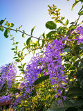 Fleurs dans le coucher du soleil Photo libre de droits