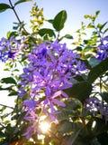 Fleurs dans le coucher du soleil Image stock