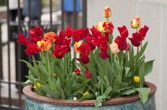 Fleurs dans le grand bac image libre de droits