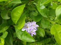 Fleurs dans le jardin Photo libre de droits