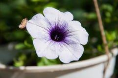 Fleurs dans le jardin Image libre de droits