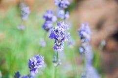Fleurs dans le jardin Photos stock