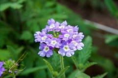 Fleurs dans le jardin Photos libres de droits
