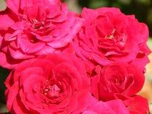 Fleurs dans le jardin Images libres de droits