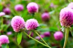 Fleurs dans le jardin avec le foyer mou Photo stock