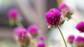 Fleurs dans le jardin avec le foyer mou Photos stock
