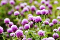 Fleurs dans le jardin avec le foyer mou, foyer brouillé Photos stock