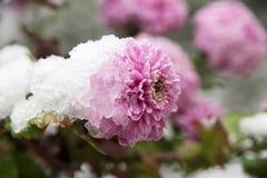 Fleurs dans le jardin d'hiver photo libre de droits