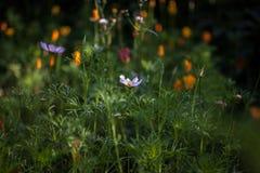Fleurs dans le lit de fleur d'automne Carte aux nuances du vert nature image stock