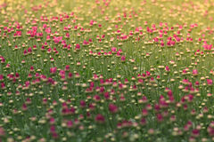 Fleurs dans le matin photo stock
