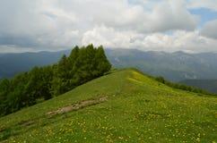 Fleurs dans le Mountain View photos stock