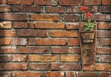 Fleurs dans le mur Images libres de droits