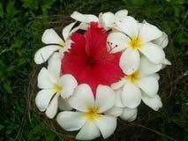Fleurs dans le nid Images libres de droits