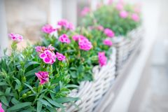 Fleurs dans le panier Image libre de droits