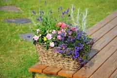 Fleurs dans le panier Photos libres de droits