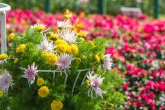 Fleurs dans le panier blanc Image stock