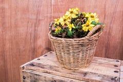 Fleurs dans le panier en osier Photo libre de droits