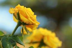 Fleurs dans le parterre Photo stock