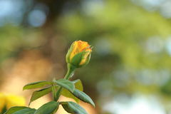 Fleurs dans le parterre Photos libres de droits