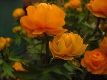 Fleurs dans le pays photographie stock libre de droits