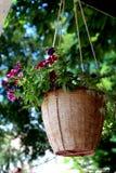 Fleurs dans le pot Photographie stock libre de droits
