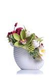 Fleurs dans le pot blanc sur le fond d'isolement avec la réflexion Photographie stock libre de droits