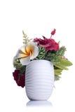 Fleurs dans le pot blanc sur le fond d'isolement avec la réflexion Image libre de droits