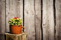 Fleurs dans le pot d'argile Photo stock