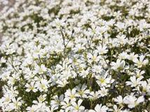 Fleurs dans le pré Photos libres de droits