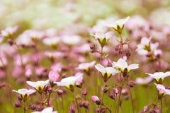 Fleurs dans le pré Photographie stock libre de droits