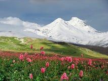 Fleurs dans le pré alpestre images stock