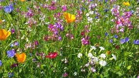 Fleurs dans le pré de fleur banque de vidéos
