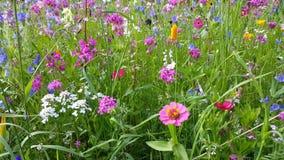 Fleurs dans le pré de fleur clips vidéos