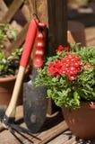 Fleurs dans le printemps Photos stock