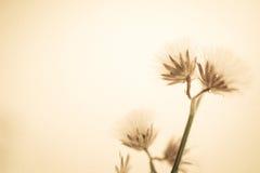 Fleurs dans le style de couleur de vintage sur la texture de papier de mûre Photo libre de droits