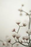 Fleurs dans le style de couleur de vintage sur la texture de papier de mûre Images stock
