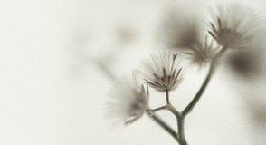 Fleurs dans le style de couleur de vintage sur la texture de papier de mûre Images libres de droits
