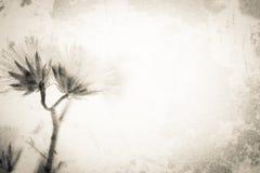 Fleurs dans le style de couleur de vintage sur la texture de papier de mûre Photo stock